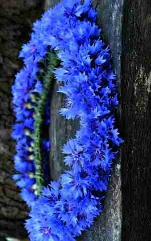 Classic Blue - Colour of the Year 2020 - Wedding